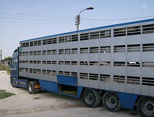 316px-Animal transport 1