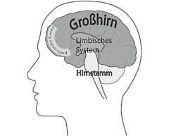 sattar_brain