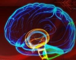 brain colorful 250