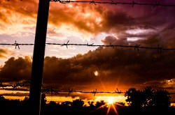 sunset barbed wire