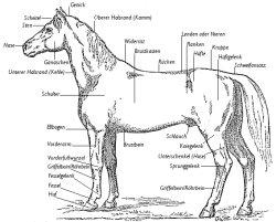 pferd bauteile
